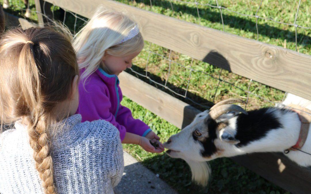 Kindergarten Students Visit Ioka Valley Farm